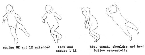 Body Righting Reflex Body Righting Acting on The