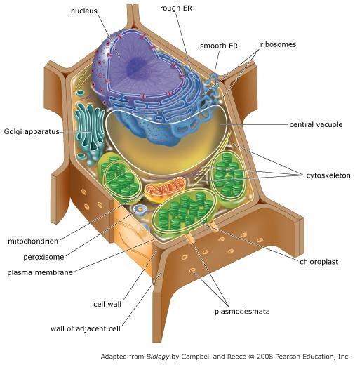 Print Chapter 6 Tour of the Cell Mastering AP Biology ...