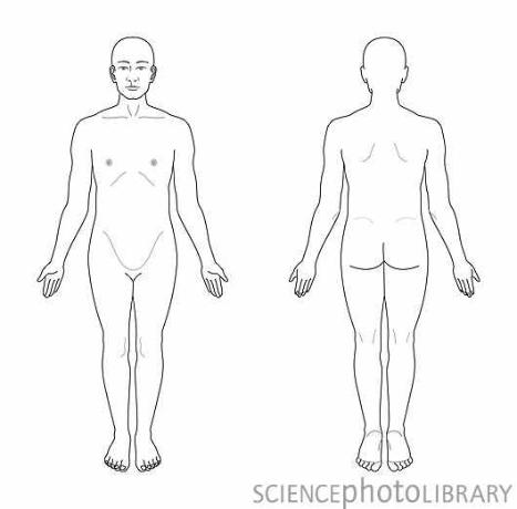 The Human Body in Health and Disease Flashcards | Easy Notecards