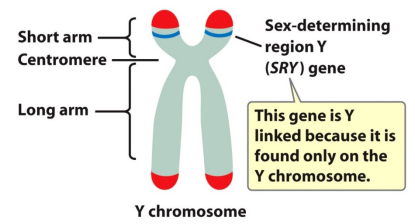 y chromosome sex determining region in Oshawa