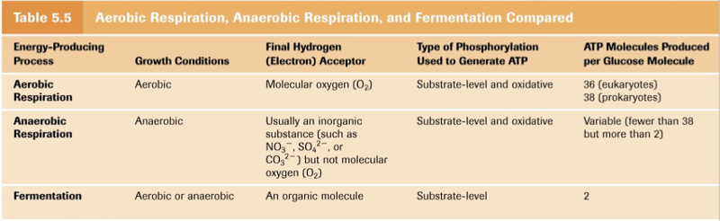 difference between an obligate and facultative aerobe essay Unlike most other organisms, bacteria have few morphological differences that  can  b bacteria called obligate anaerobes cannot live in the   facultative anaerobes can use oxygen when it is available,   answer the question in essay form (not outline form), using complete sentences.