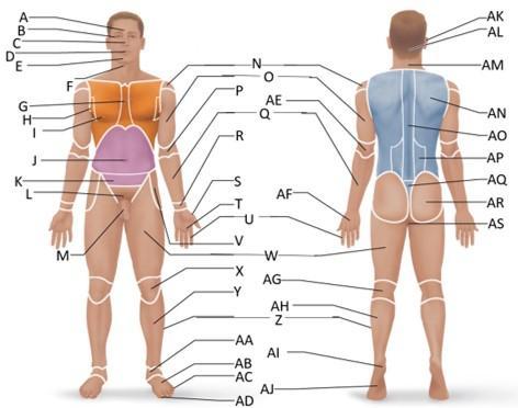 Print Human Anatomy Final Flashcards Easy Notecards