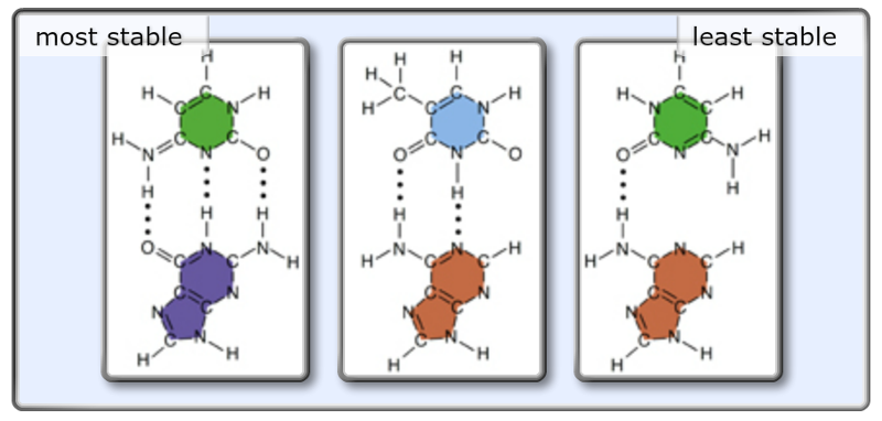 diagram of two nucleotide base pairs choice image how to