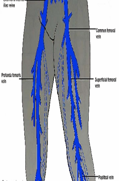 femoral vein to the lower lobe The dome of the right lung lies lower than the left lung which may extend above   the femoral vein is located medial to the femoral artery and the femoral nerve.