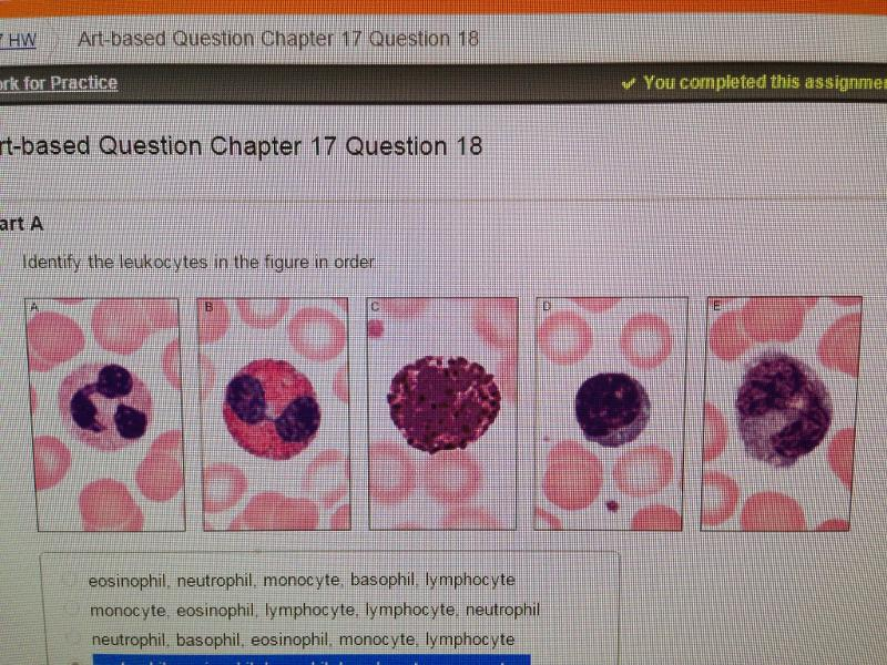 Chapter 17 Blood Mastering Flashcards Easy Notecards