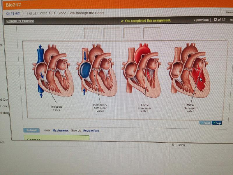 Chapter 18 Cardiovascular Systemmastering Flashcards Easy Notecards