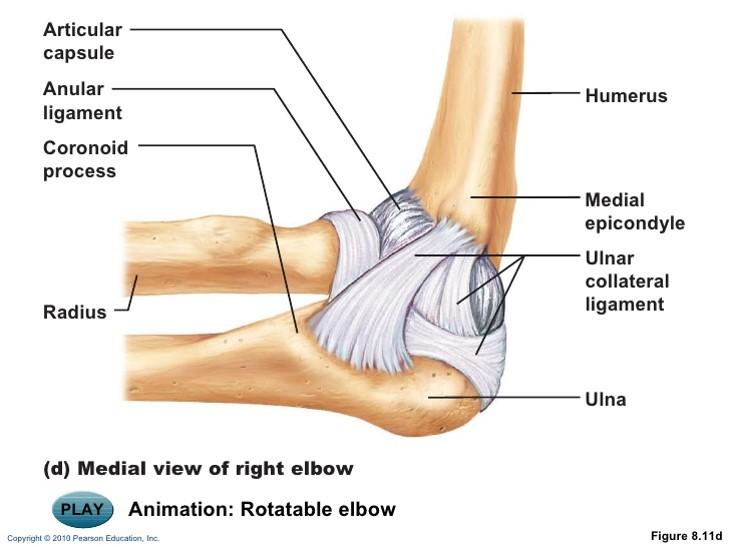 Lateral collateral ligament anatomy