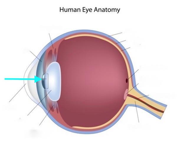 Print Human Eye Flashcards Easy Notecards